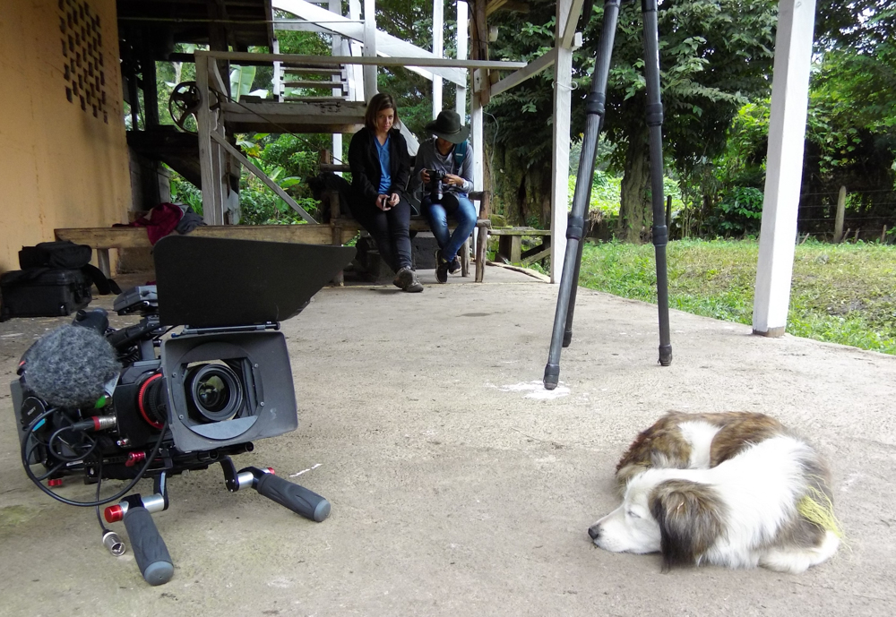 Still life with camera and dog.