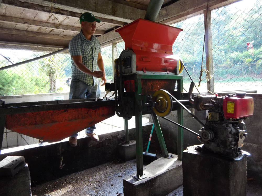 De-pulping coffee beans in a wet mill.