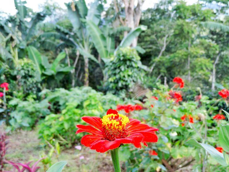 Coffee finca, northern Nicaragua.
