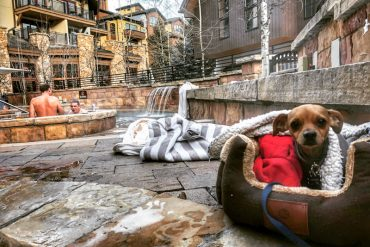 Dog friendly hotel Colorado