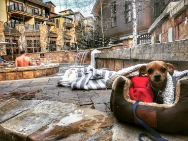 Dog friendly hotel Colorado
